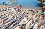 U.S. blocks seafood imports from Chinese fleet over alleged crew mistreatment, forced labor